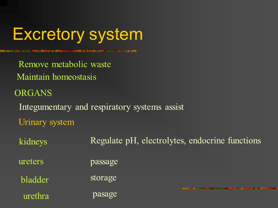 Excretory system Remove metabolic waste Maintain homeostasis ORGANS