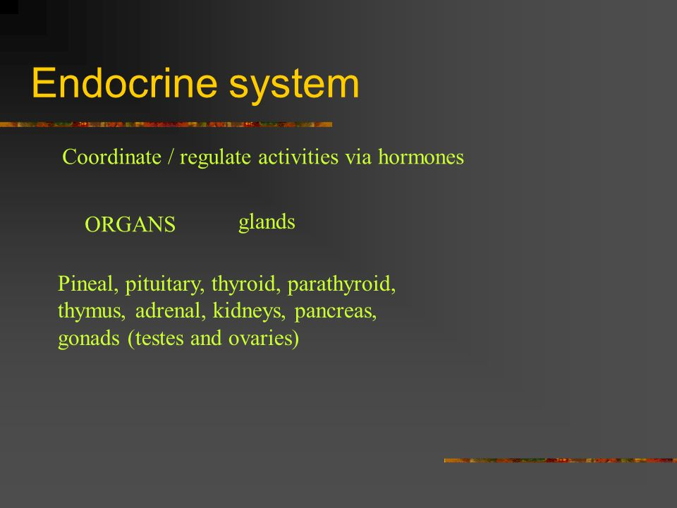 Endocrine system Coordinate / regulate activities via hormones glands