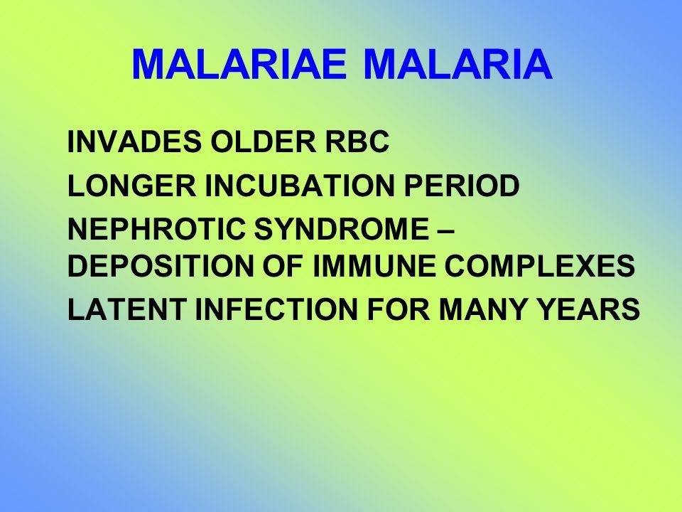 MALARIAE MALARIA INVADES OLDER RBC LONGER INCUBATION PERIOD