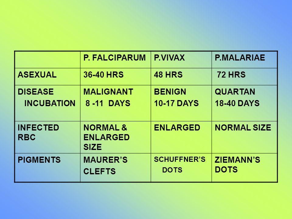 P. FALCIPARUM P.VIVAX P.MALARIAE ASEXUAL 36-40 HRS 48 HRS 72 HRS