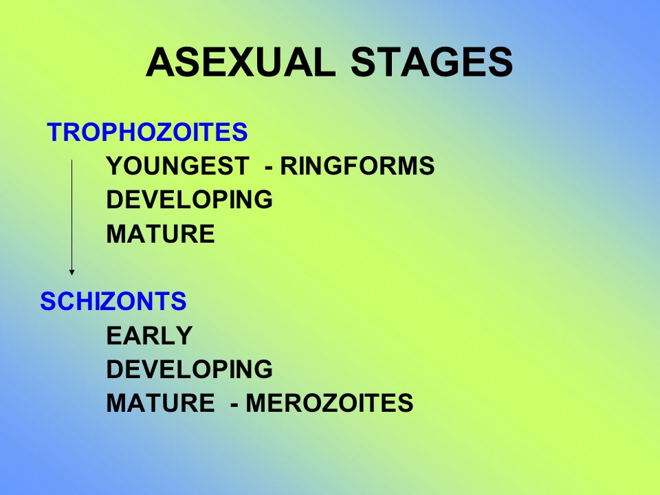 ASEXUAL STAGES TROPHOZOITES YOUNGEST - RINGFORMS DEVELOPING MATURE