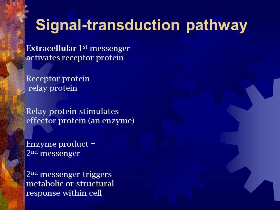 Signal-transduction pathway