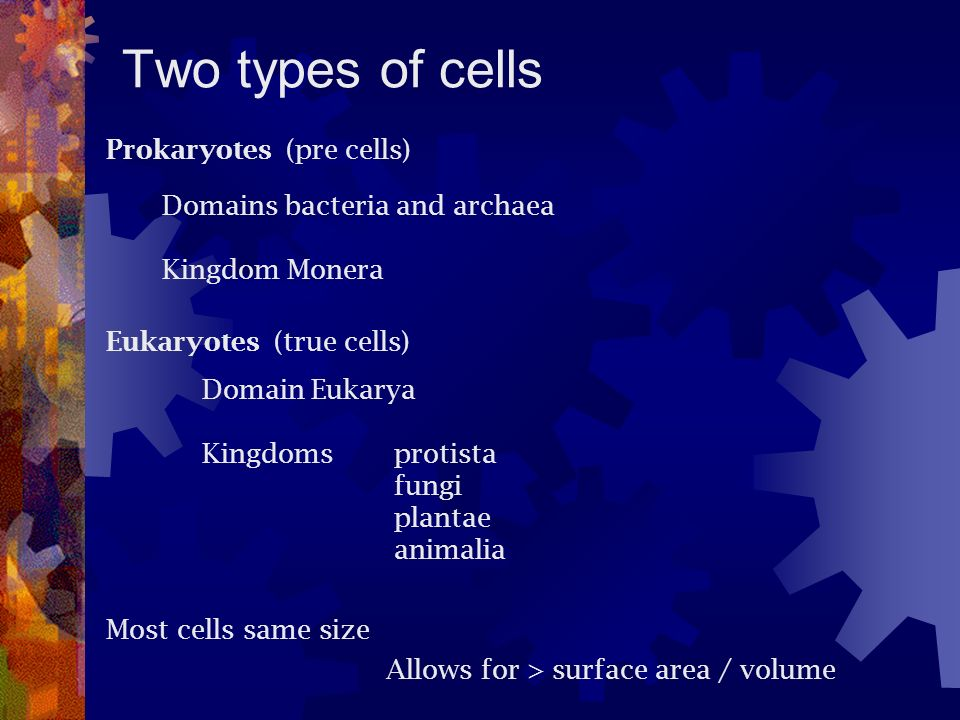 Two types of cells Prokaryotes (pre cells)