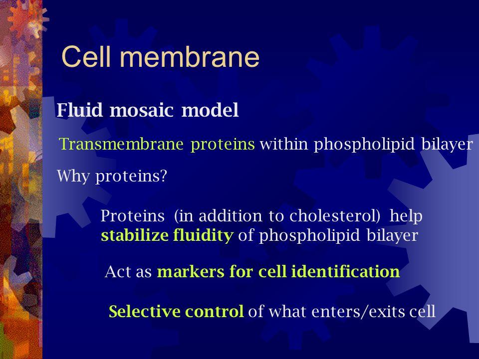 Cell membrane Fluid mosaic model