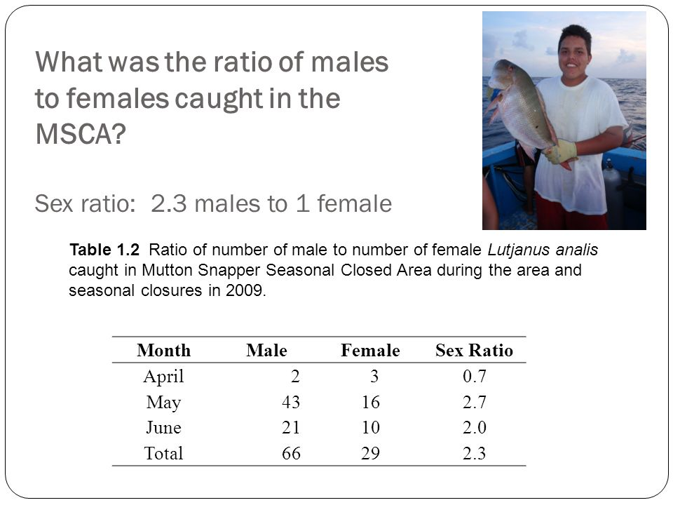 What was the ratio of males to females caught in the MSCA Sex ratio: 2.3 males to 1 female