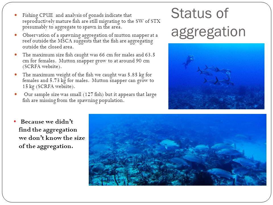 Status of aggregation