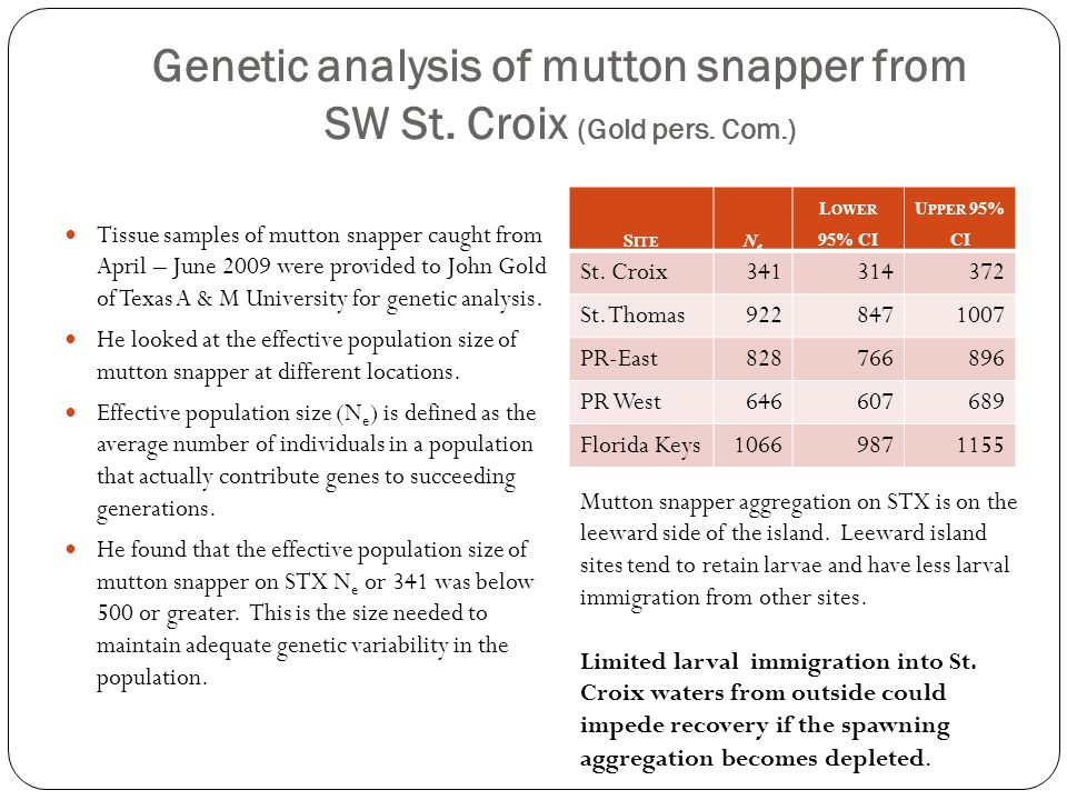 Genetic analysis of mutton snapper from SW St. Croix (Gold pers. Com.)