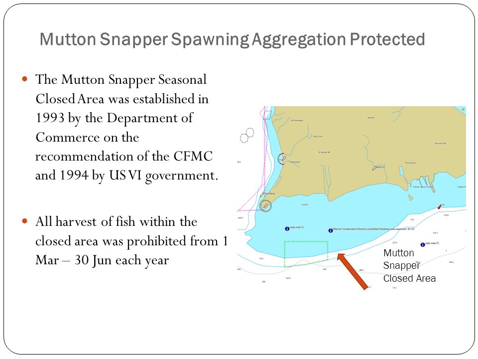 Mutton Snapper Spawning Aggregation Protected