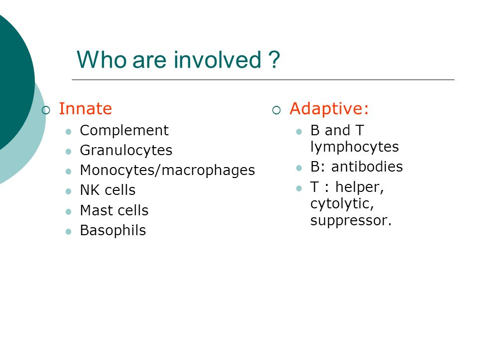 Who are involved Innate Adaptive: Complement Granulocytes