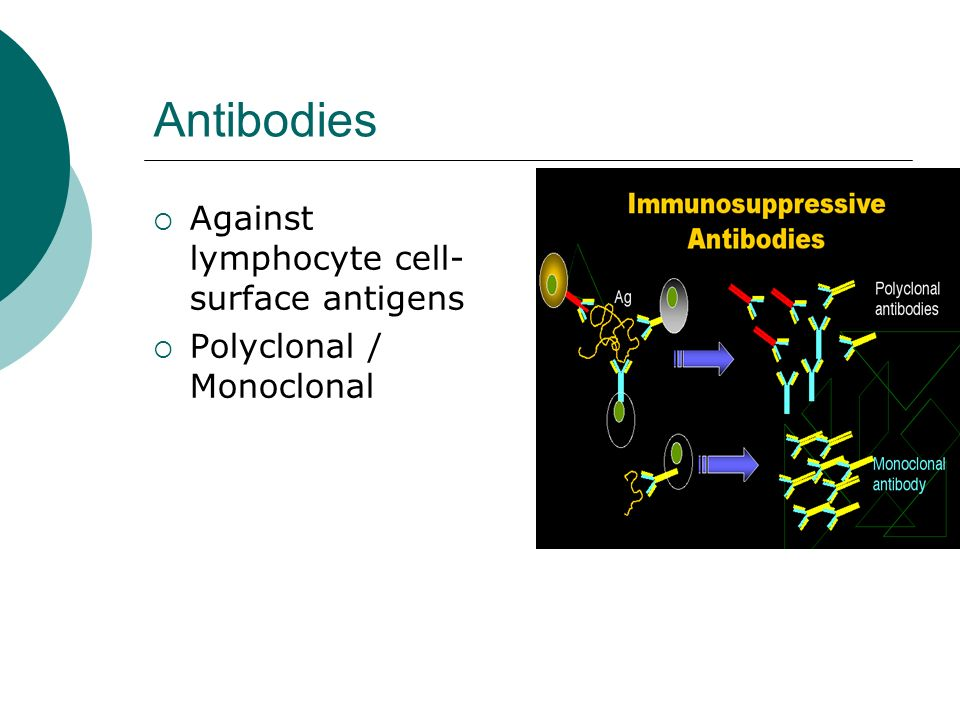 Antibodies Against lymphocyte cell-surface antigens