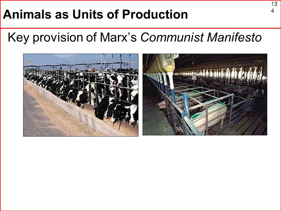Animals as Units of Production
