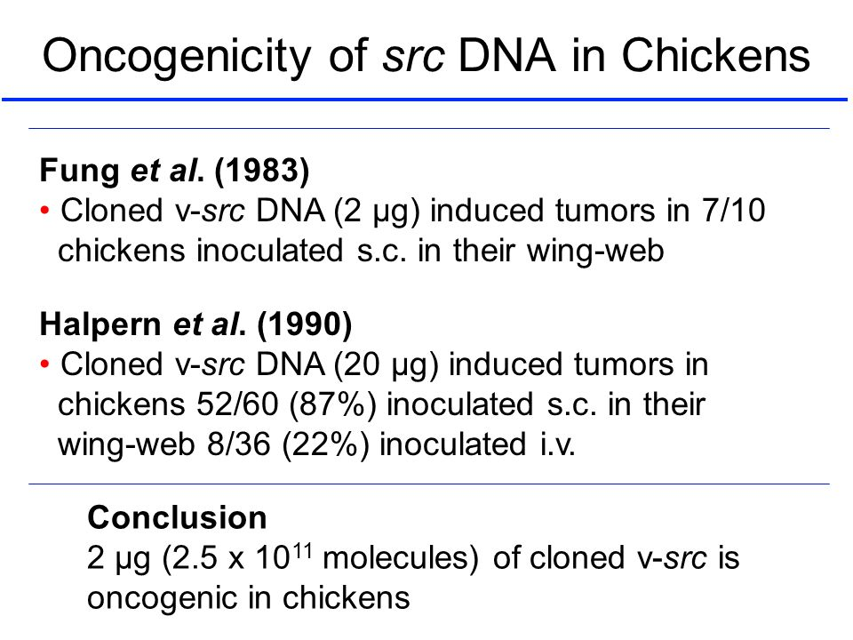 Oncogenicity of src DNA in Chickens