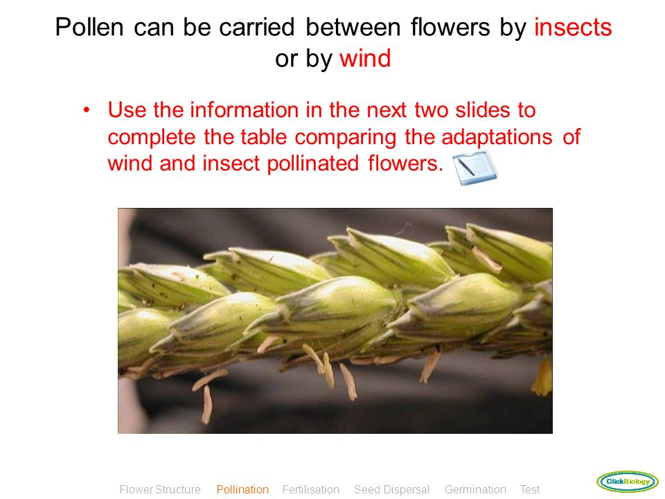 Pollen can be carried between flowers by insects or by wind