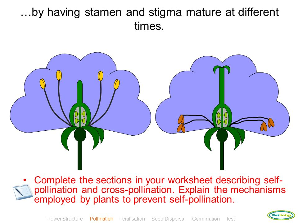 …by having stamen and stigma mature at different times.