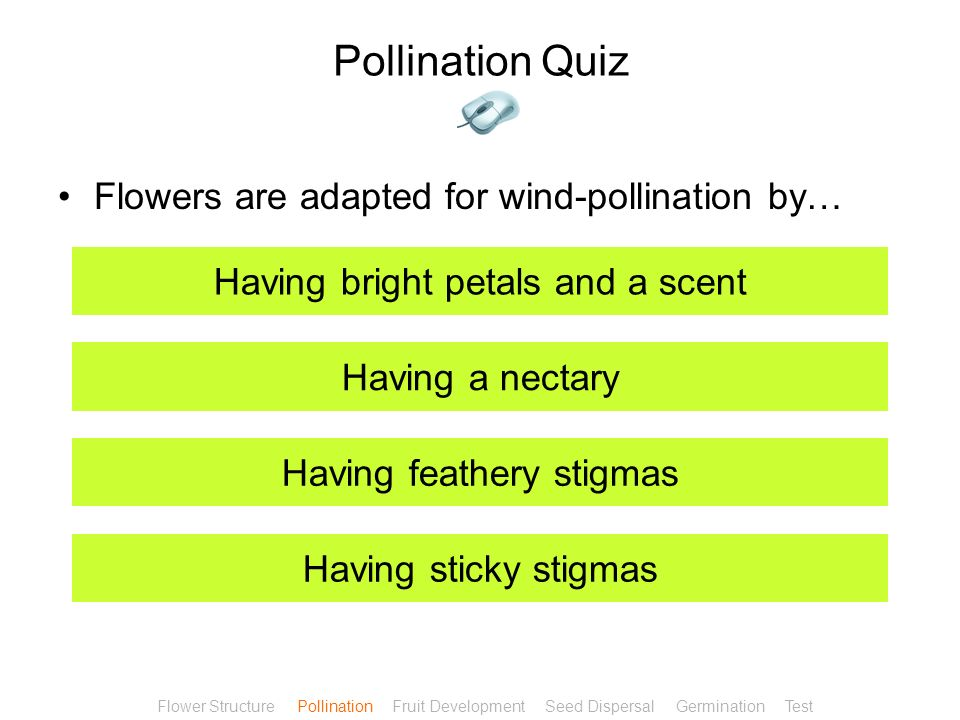 Pollination Quiz Flowers are adapted for wind-pollination by…
