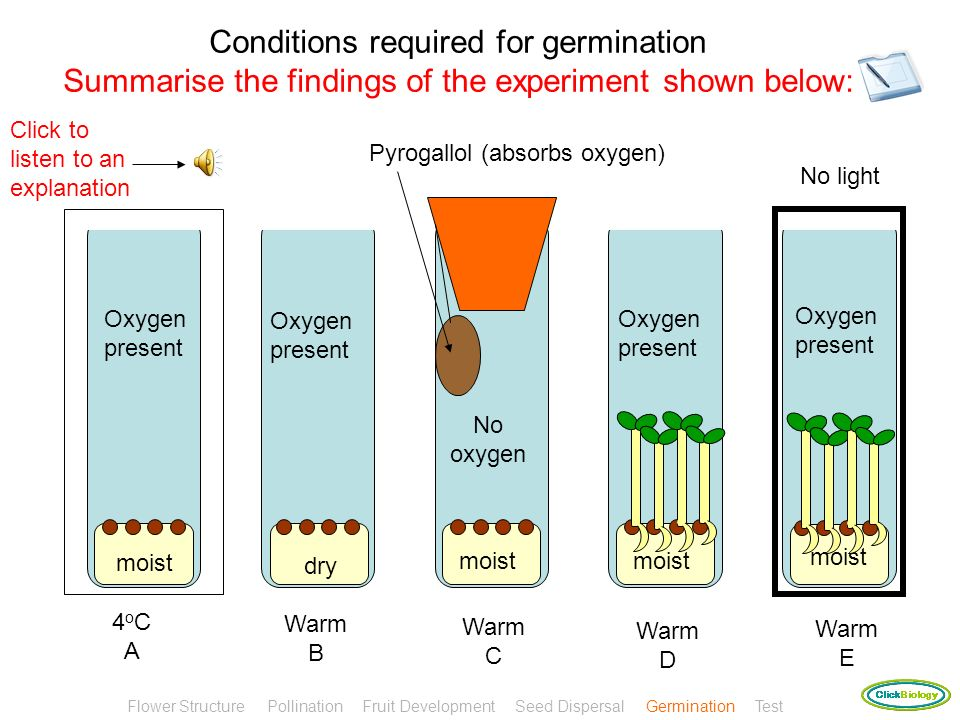 Conditions required for germination Summarise the findings of the experiment shown below: