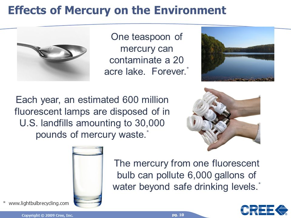 Effects of Mercury on the Environment