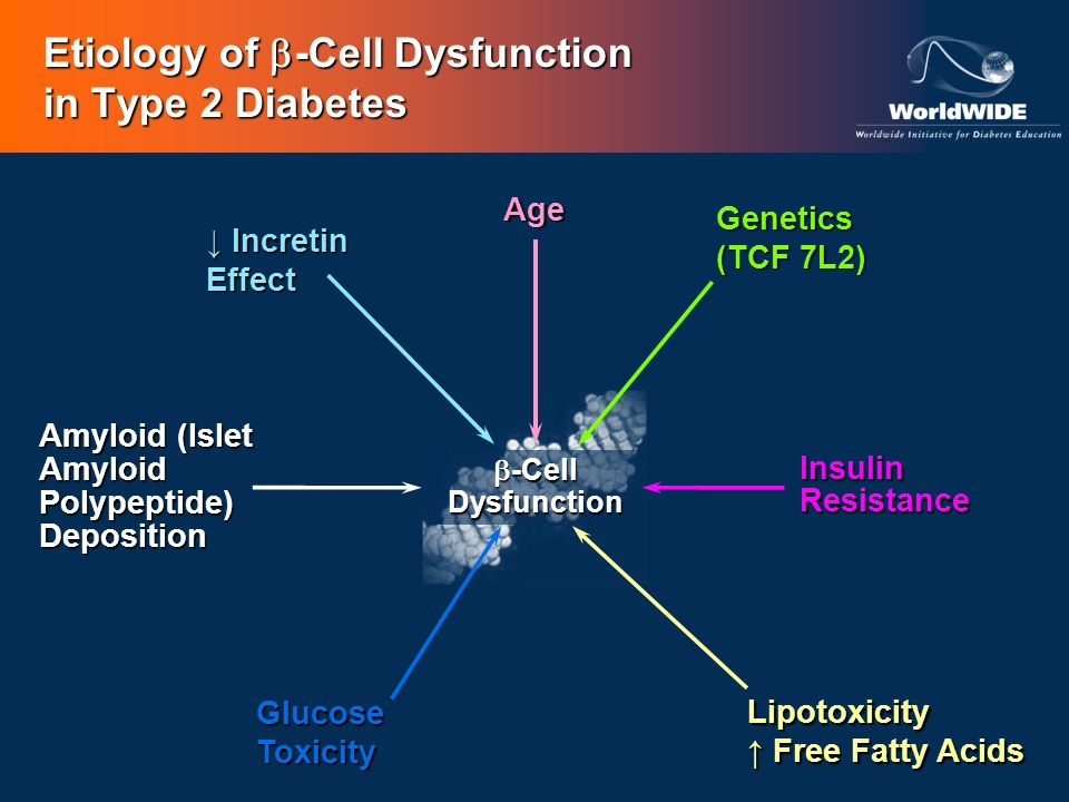 Etiology of -Cell Dysfunction in Type 2 Diabetes