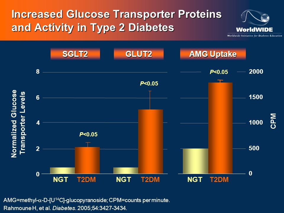 Increased Glucose Transporter Proteins and Activity in Type 2 Diabetes