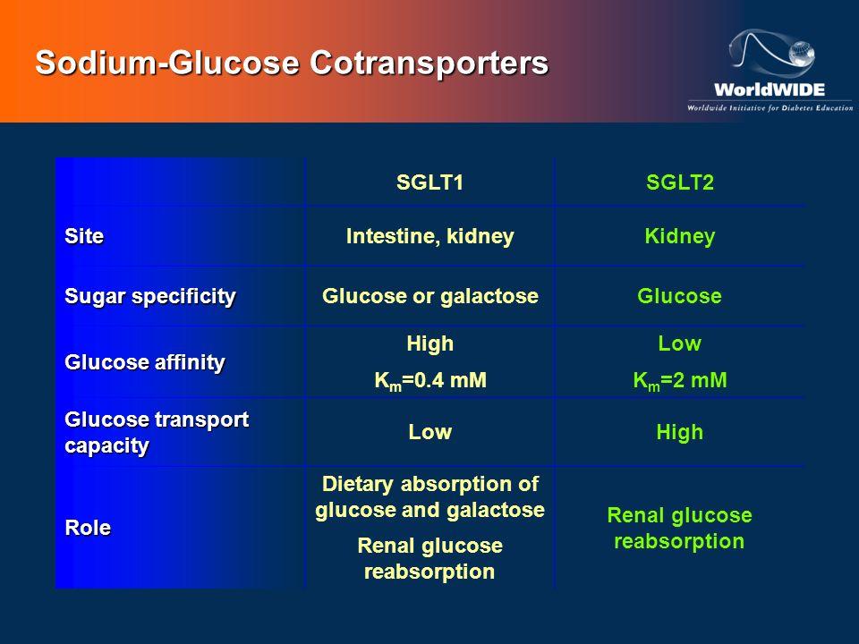 Sodium-Glucose Cotransporters