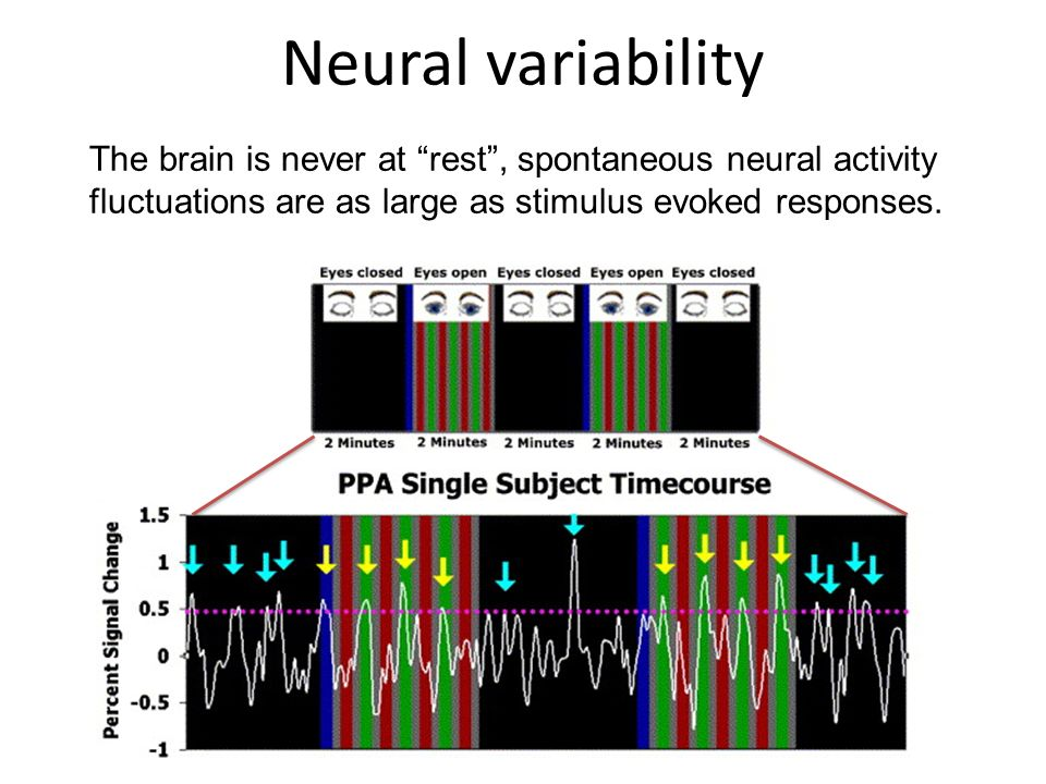Neural variability The brain is never at rest , spontaneous neural activity fluctuations are as large as stimulus evoked responses.