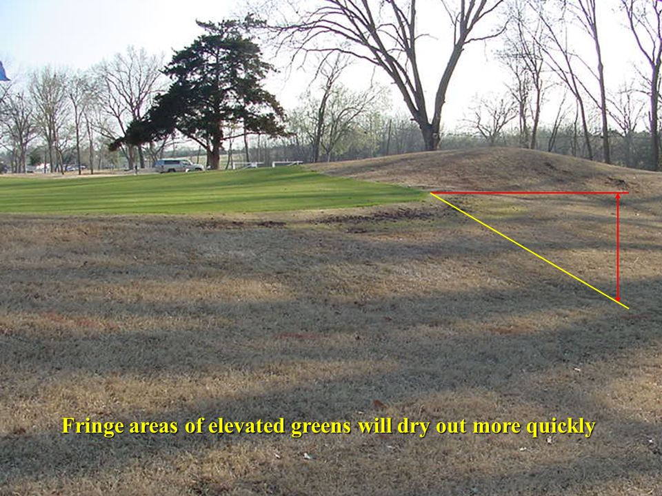 Fringe areas of elevated greens will dry out more quickly