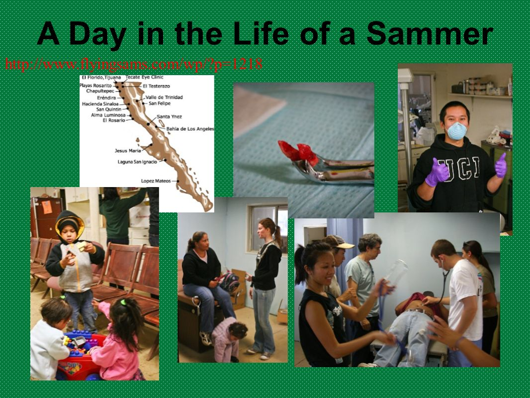 A Day in the Life of a Sammer