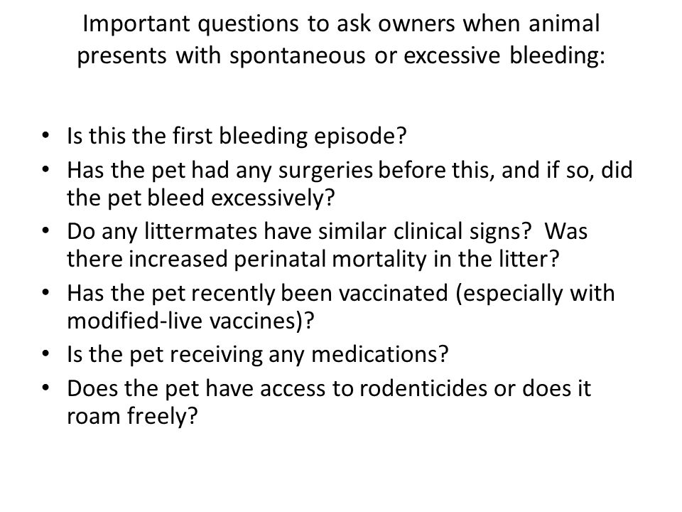 Important questions to ask owners when animal presents with spontaneous or excessive bleeding: