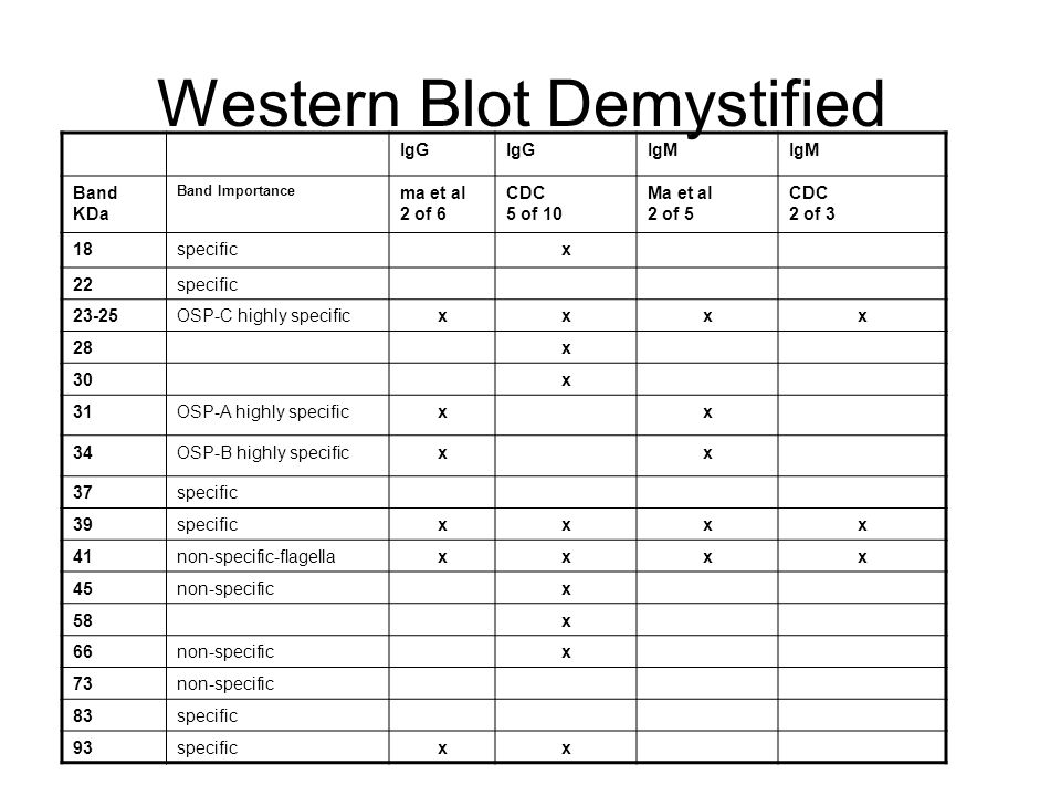 Western Blot Demystified