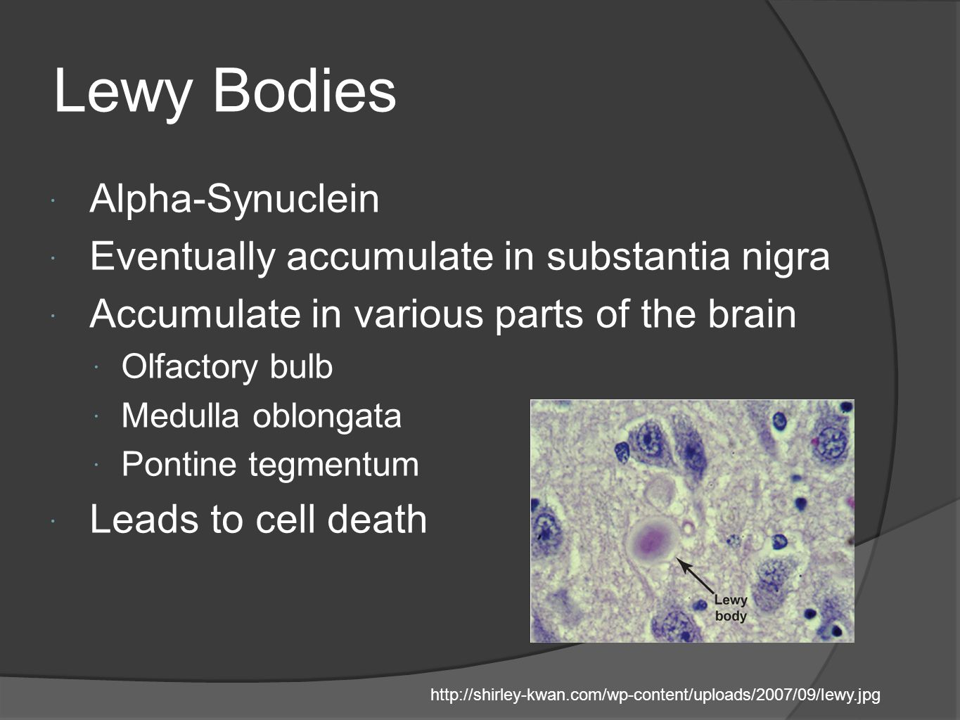 Lewy Bodies Alpha-Synuclein Eventually accumulate in substantia nigra