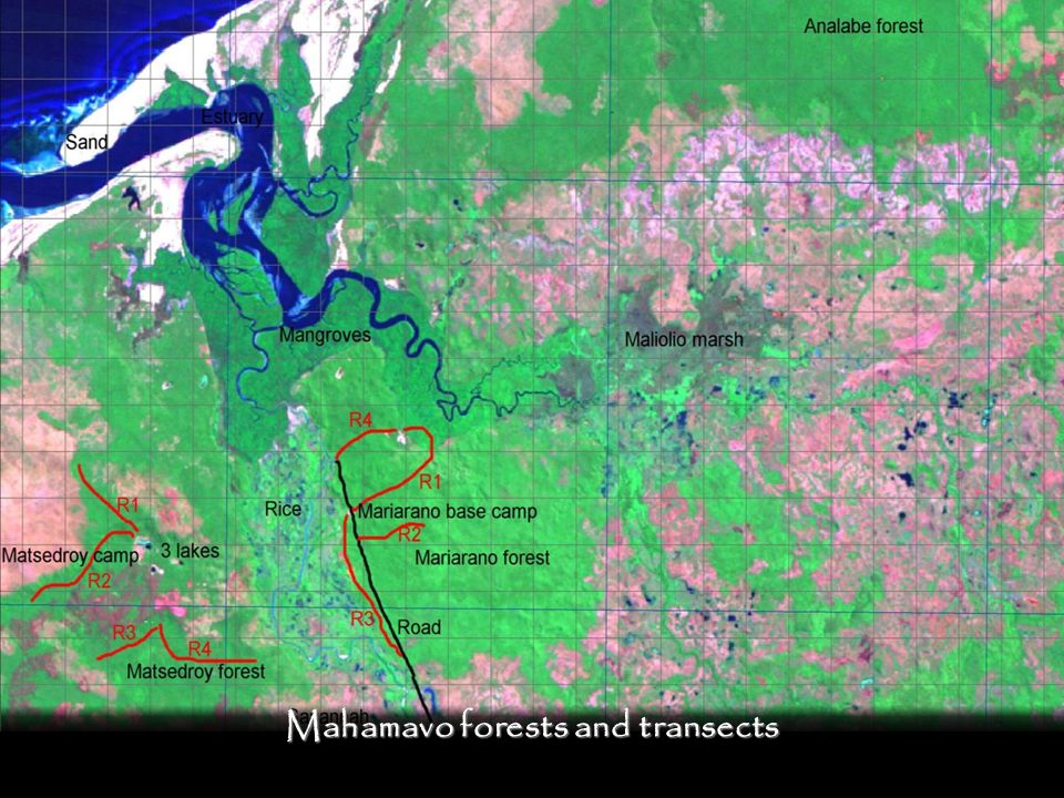 Mahamavo forests and transects