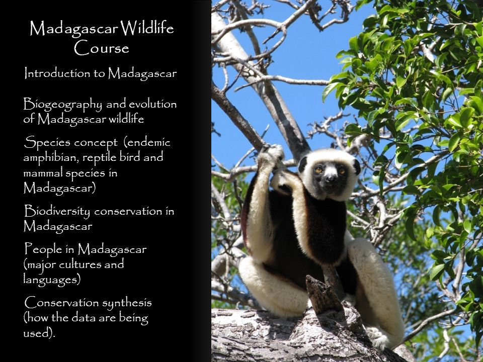 Madagascar Wildlife Course
