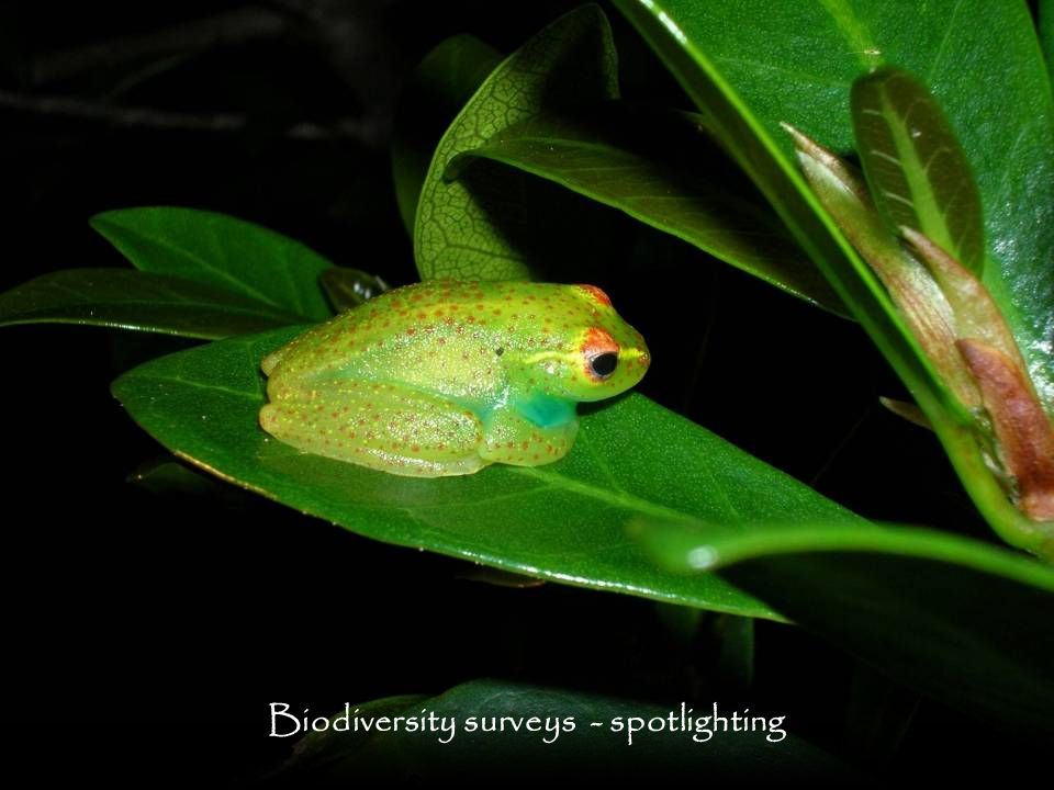 Biodiversity surveys - spotlighting