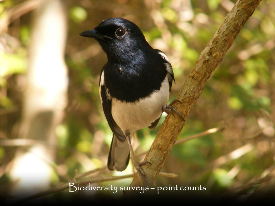 Biodiversity surveys – point counts