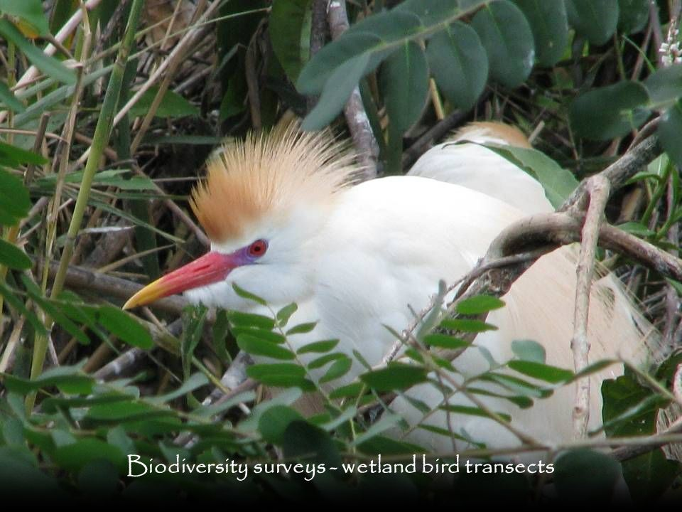 Biodiversity surveys - wetland bird transects