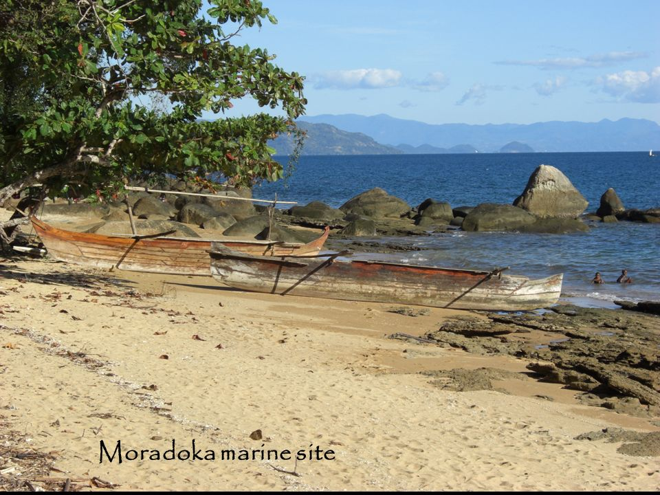 The Moradoka site is on the edge of a small village and just 400m from the edge of the Lokobe Reserve.
