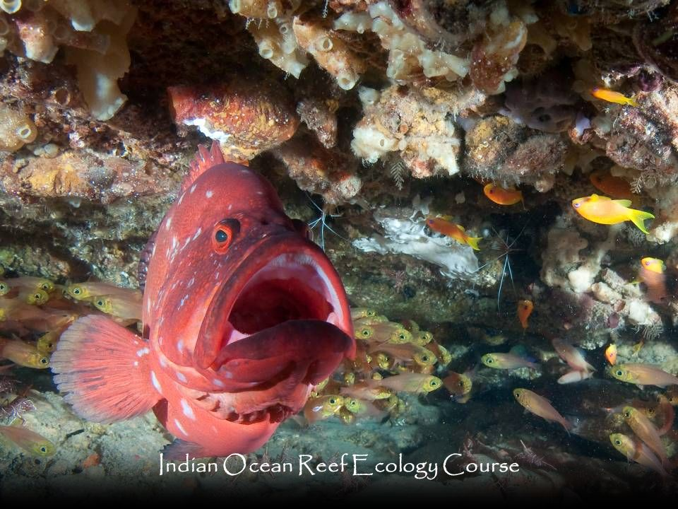 Indian Ocean Reef Ecology Course
