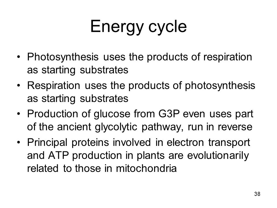 Energy cycle Photosynthesis uses the products of respiration as starting substrates.