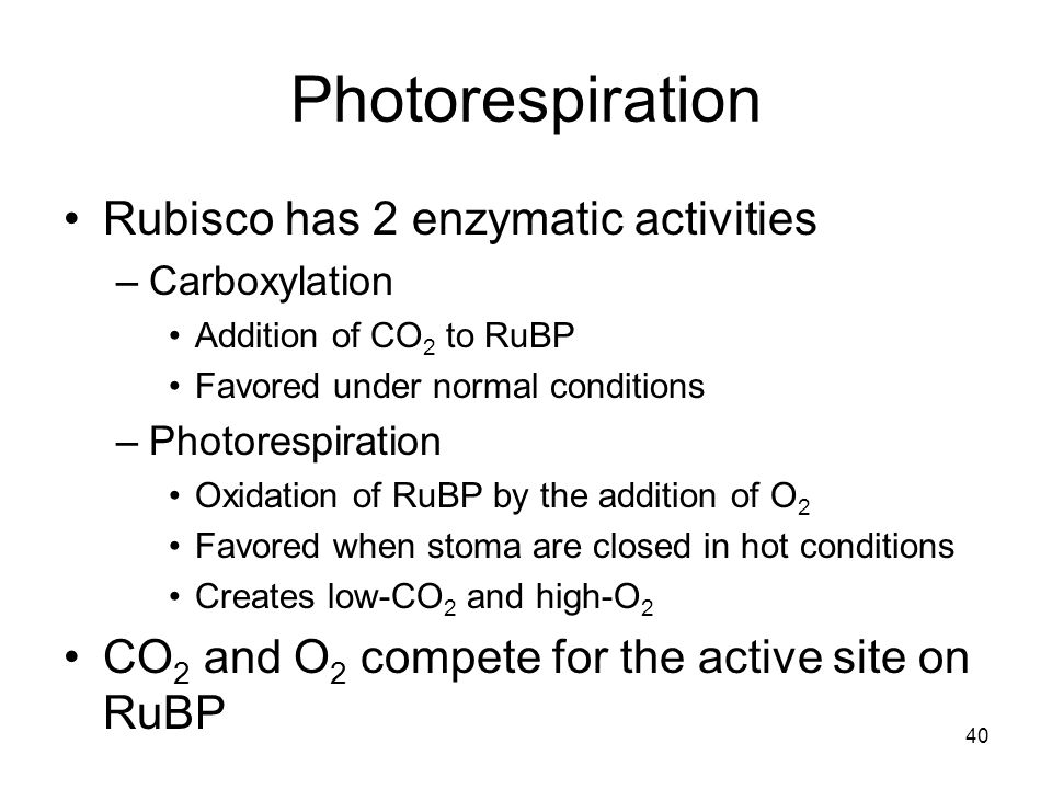Photorespiration Rubisco has 2 enzymatic activities