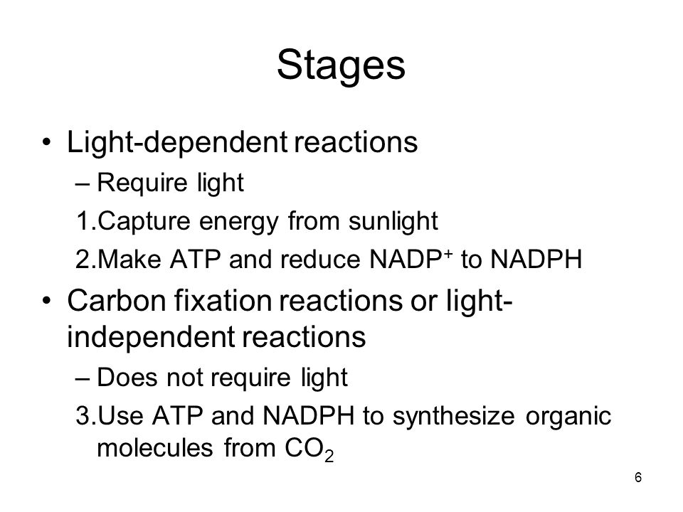 Stages Light-dependent reactions