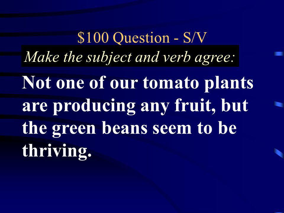 $100 Question - S/V Make the subject and verb agree: Not one of our tomato plants are producing any fruit, but the green beans seem to be thriving.