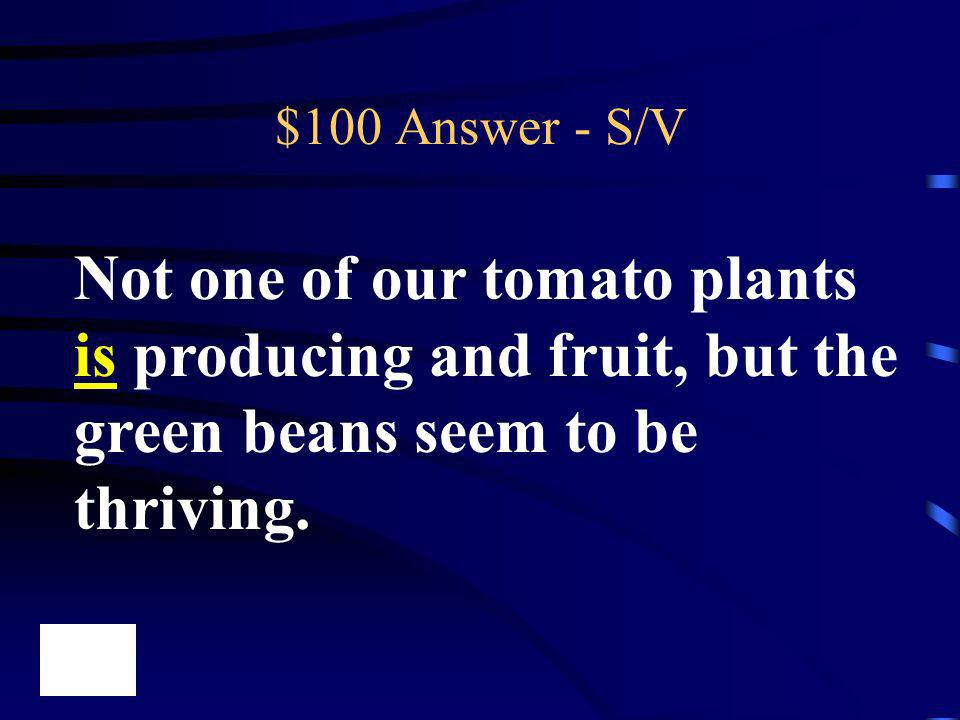 $100 Answer - S/V Not one of our tomato plants is producing and fruit, but the green beans seem to be thriving.