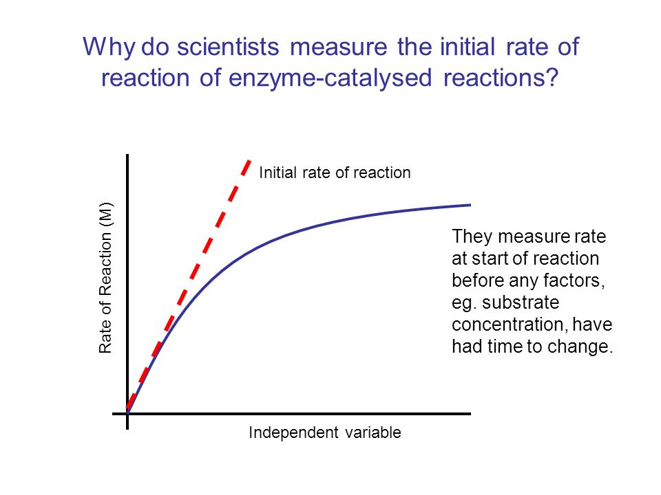 Why do scientists measure the initial rate of reaction of enzyme-catalysed reactions