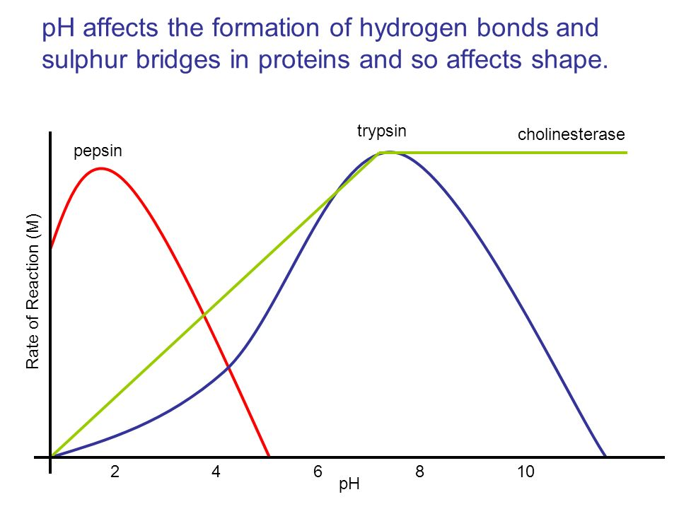 pH affects the formation of hydrogen bonds and sulphur bridges in proteins and so affects shape.