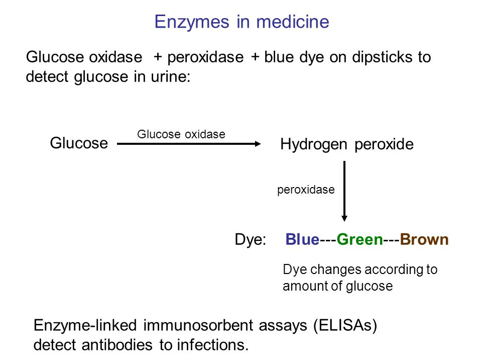 Enzymes in medicine Glucose oxidase + peroxidase + blue dye on dipsticks to detect glucose in urine: