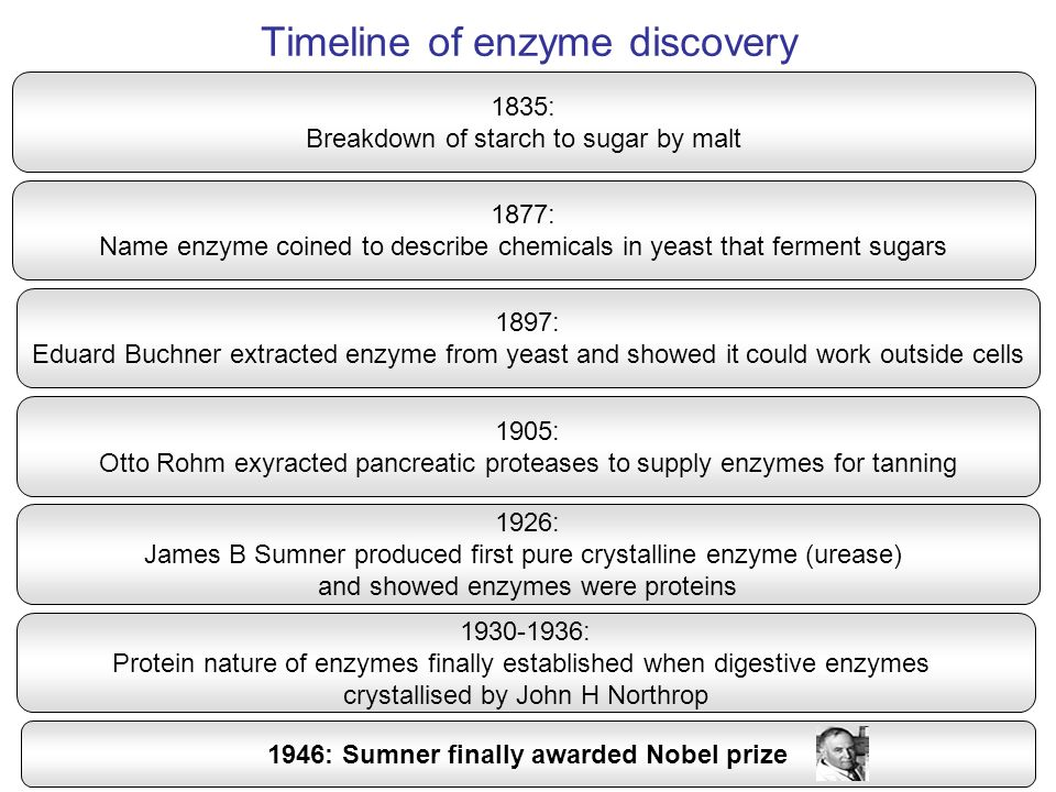 Timeline of enzyme discovery