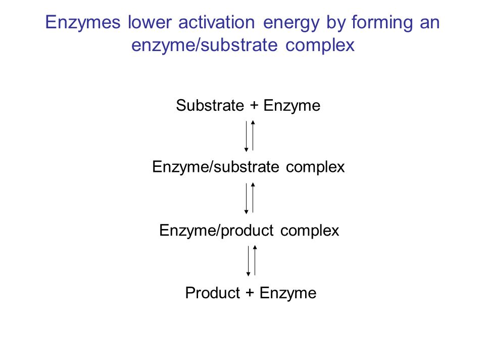 Enzymes lower activation energy by forming an enzyme/substrate complex