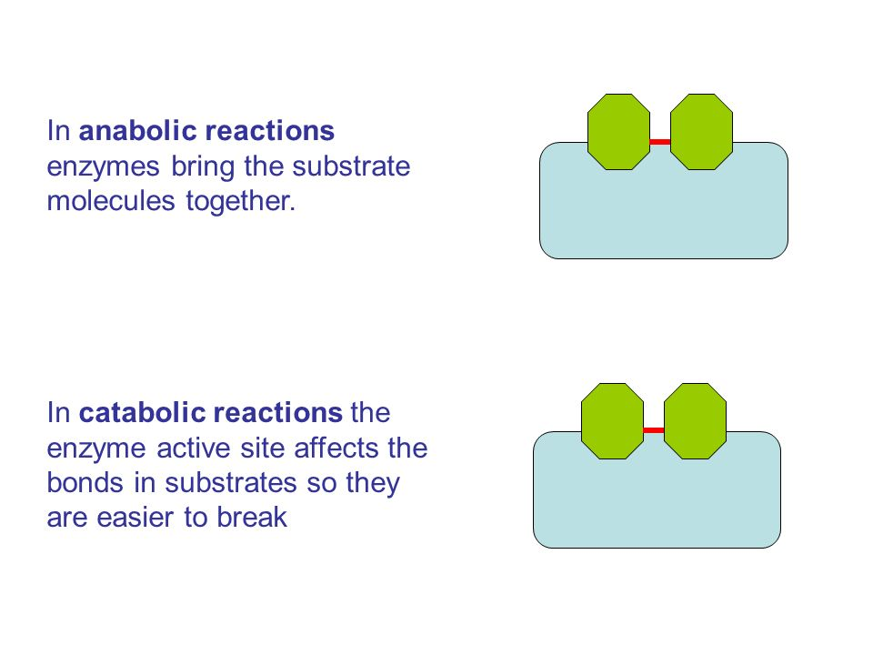 In anabolic reactions enzymes bring the substrate molecules together.