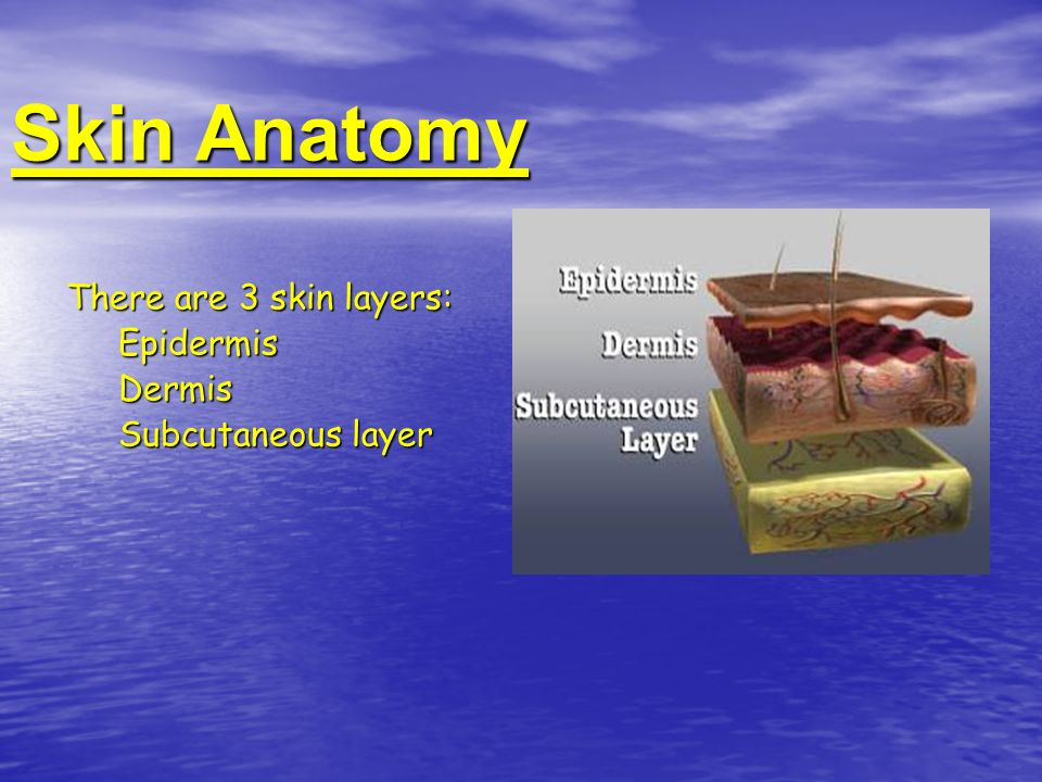 Skin Anatomy There are 3 skin layers: Epidermis Dermis