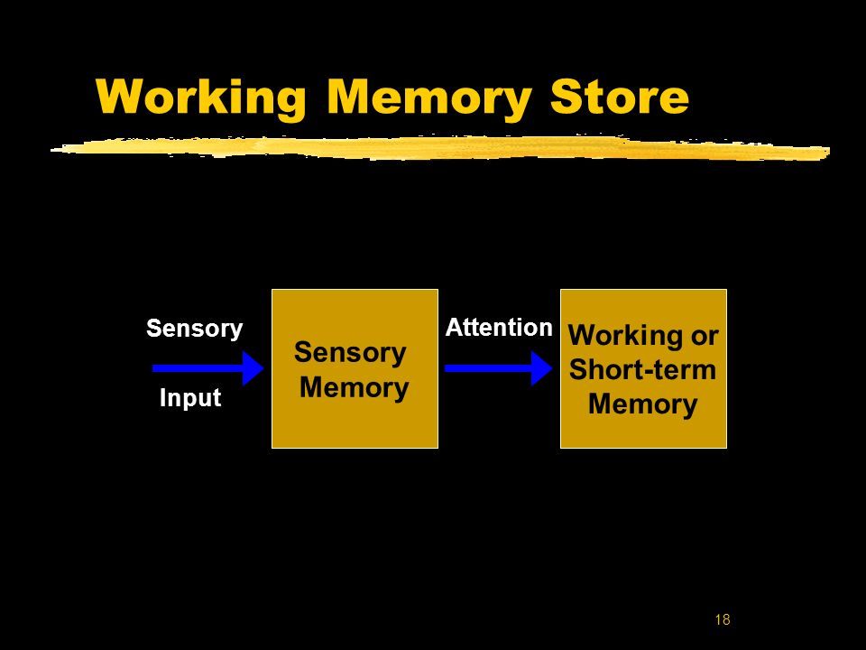 Working Memory Store Working or Short-term Memory Sensory Attention